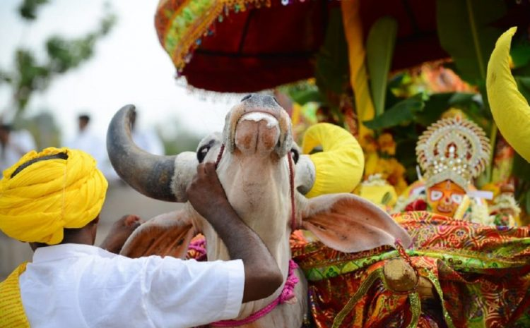 Mourning Of Rural Residents In India For The Death Of A Beloved Cow