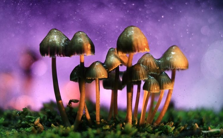 Mycology Astronomy: Strange Solutions To Space Problems