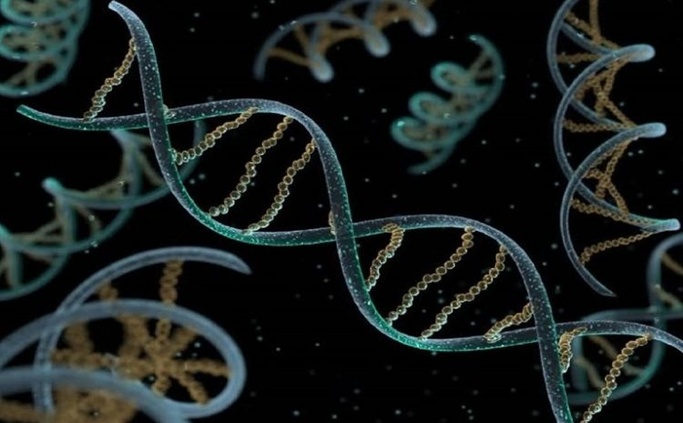 Mammals Carry A Graveyard Of Viruses Into Their DNA