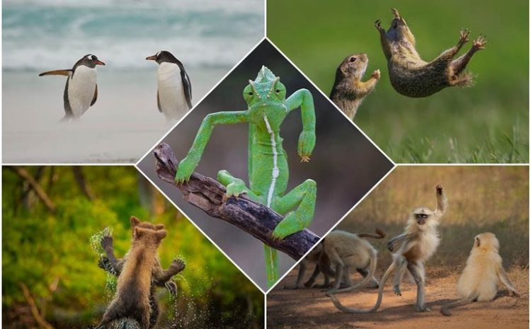 The Finalists Of The 2021 Wildlife Comedy Photography Competition
