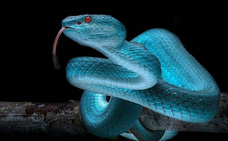 Why Is The Blue Color So Rare In Nature?